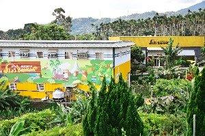 ฟาร์ม Jiji banana(集元果農場)