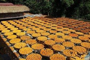 味衛佳柿餅教育農園